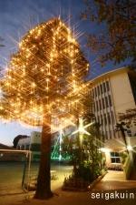【駒込ツリー点火祭】小学校にて。クリスマスツリーと校舎耐震柱にも電飾を施しました