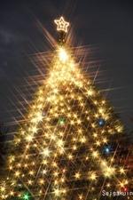 08聖学院小学校のクリスマスツリー